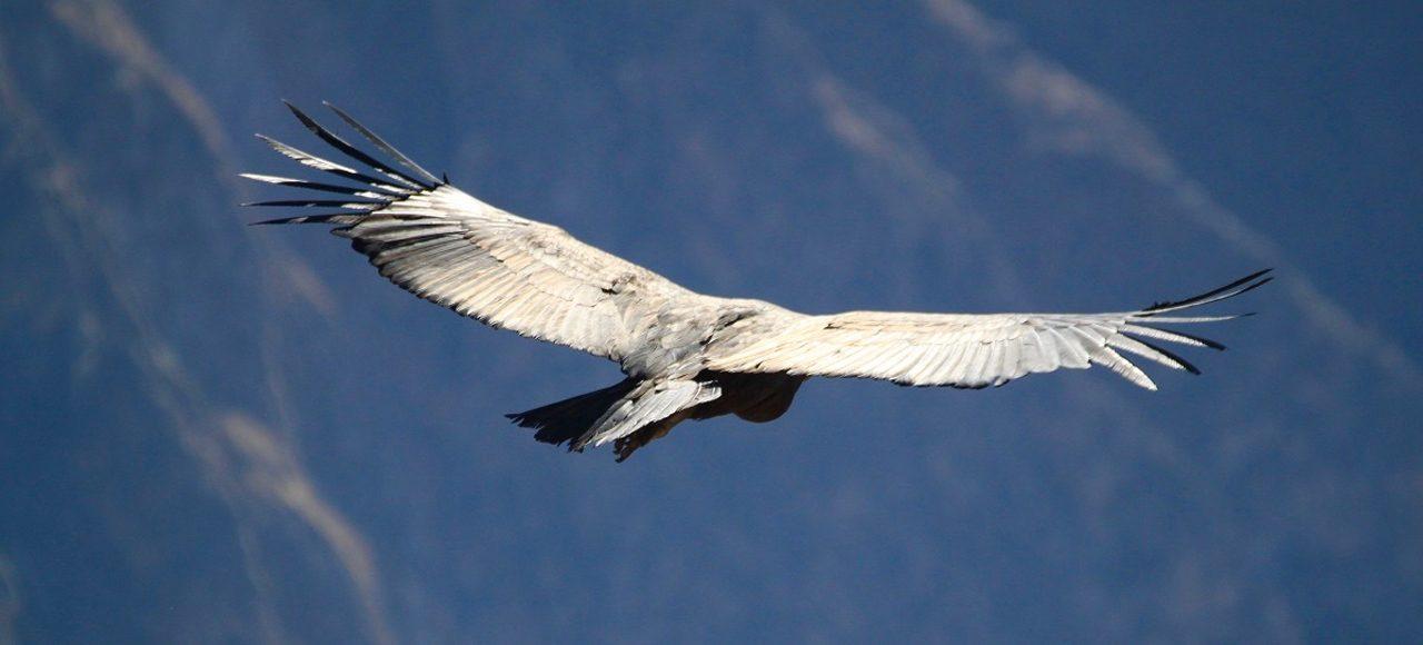 Singlereise Peru - Cruz del Condor
