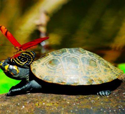 Singlereise Peru - Schildkröte