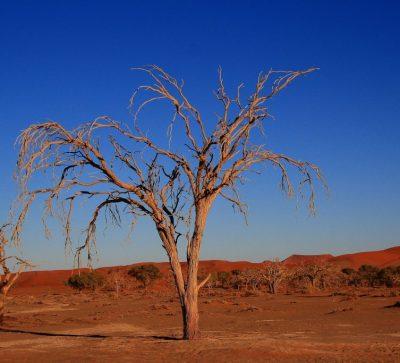 Singlereise Namibia - die rote Steppe