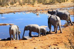 Singlereise Namibia - Elefantenfamilie